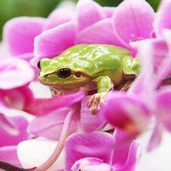 Древесная лягушка встречает весну