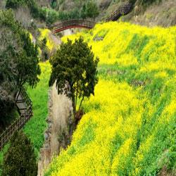 Lembah Bunga yang Kosong