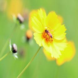 '여름 담는 꿀벌'