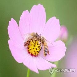 Aktivitas Lebah Bunga