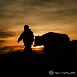 2021 신축년 소띠해, 소처럼 힘차게!