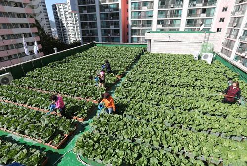 Pertanian Kota