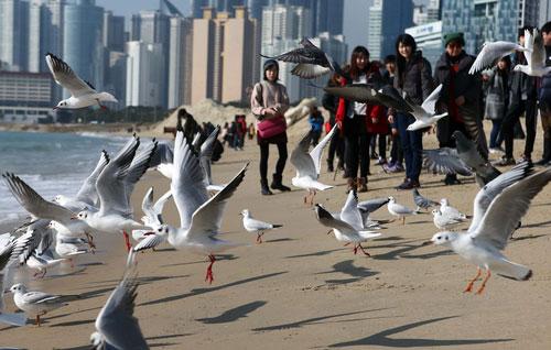 Чайки на зимнем пляже
