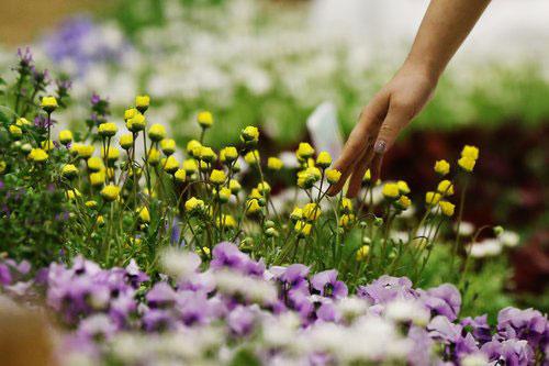 Spring on my Fingertips