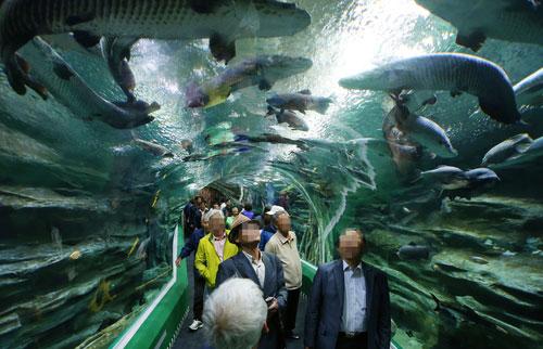 Akuarium Mal Lotte World Dibuka Lagi