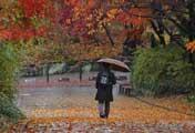 Hujan di Musim Gugur