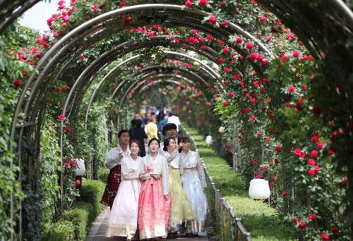 Túnel de rosas