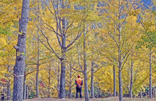 Dedaunan Musim Gugur