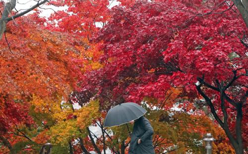雨中秋季校园