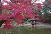 Peak Foliage at Seoul Palace