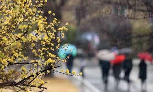 Spring Drizzle
