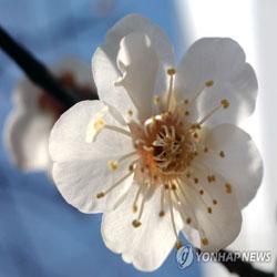 زهور يناير