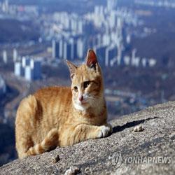 قطة على صخرة