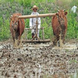 Membajak dengan Lembu