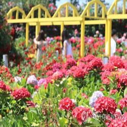 جنة الورود في جيجو