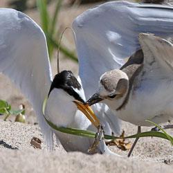 Quarreling Beaks