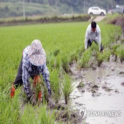 Inundación de cultivos