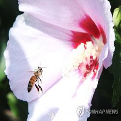 폭염에도 분주한 꿀벌