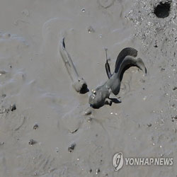 生態学の宝庫「韓国の干潟」が世界自然遺産に