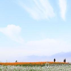 Thu trên đảo Jeju