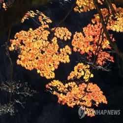Горы Сораксан оделись в яркие осенние цвета