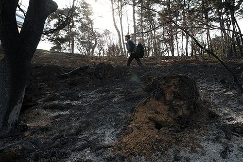 Пострадавшие от лесного пожара районы провинции Канвондо объявлены особой зоной бедствия