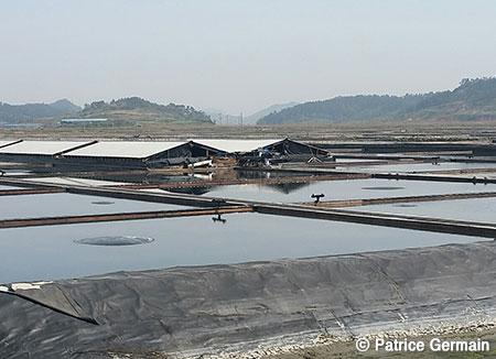 Une île particulière, Jeungdo