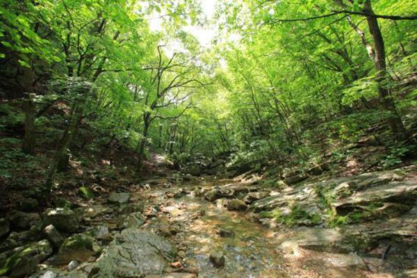 Yangpyeong-gun: Natur pur am Gebirgsbach