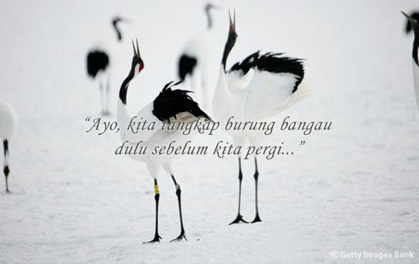 """""""Burung Bangau"""" oleh Hwang Sun-won"""