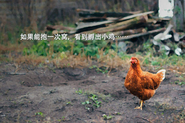 童话作家黄善美的《走出院子的母鸡》