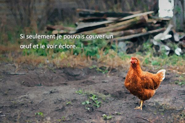 « La poule qui voulait vivre sa vie » de Hwang Sun-mi