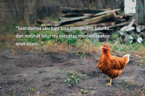 """Leafie: Ayam Buruk Rupa dan Itik Kesayangannya"" oleh Hwang Sunmi"
