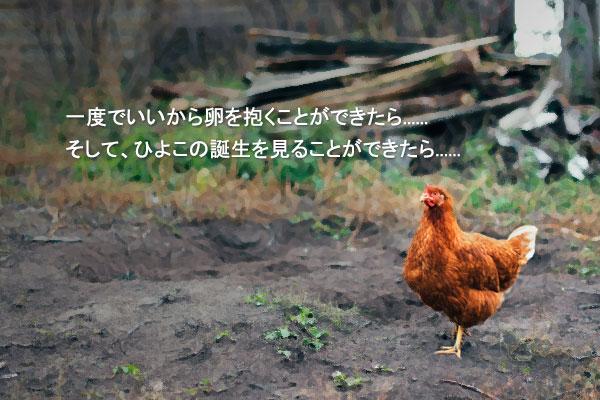 黄善美(ファン・ソンミ)の童話「庭を出ためんどり」