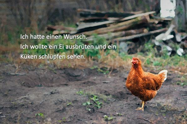 """Hwang Sun-mi: """"Das Huhn, das vom Fliegen träumte"""""""