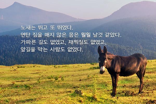 노새 두 마리 - 최일남