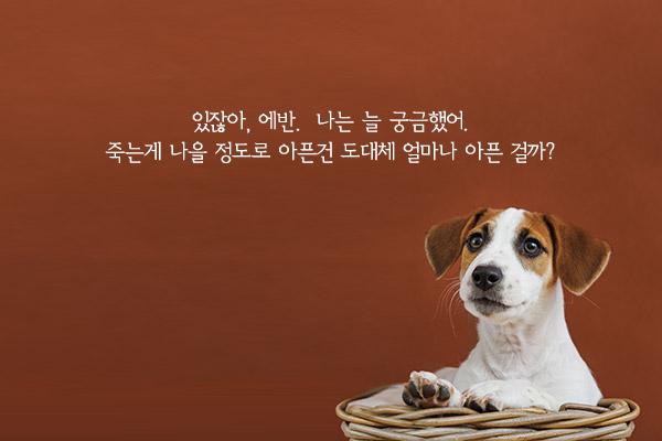 노찬성과 에반 - 김애란