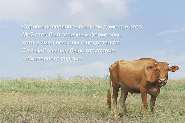 Рассказ «Поиски коровы» писателя Чон Сон Тхэ