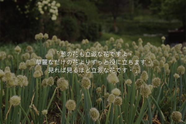 イ・ヒョンスの短編小説「葱の花」