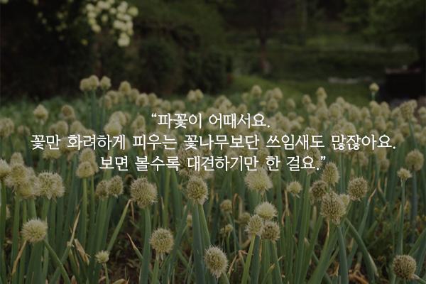 파꽃 - 이현수