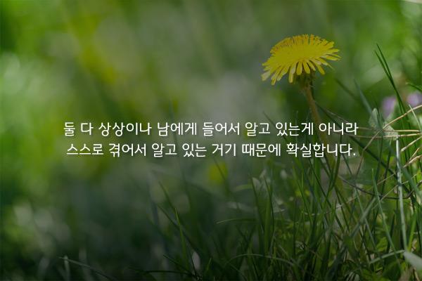 옥상의 민들레꽃 - 박완서