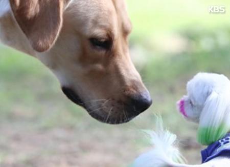 Gyeonggi promueve el uso del bozal para perros