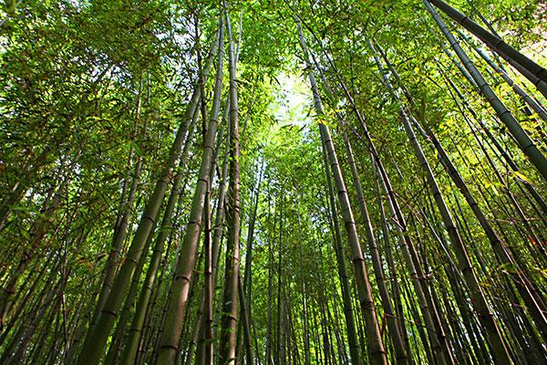 Bosque de bambú en Damyang