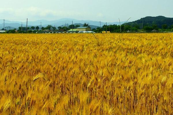 Esplendor del otoño en Jangseong