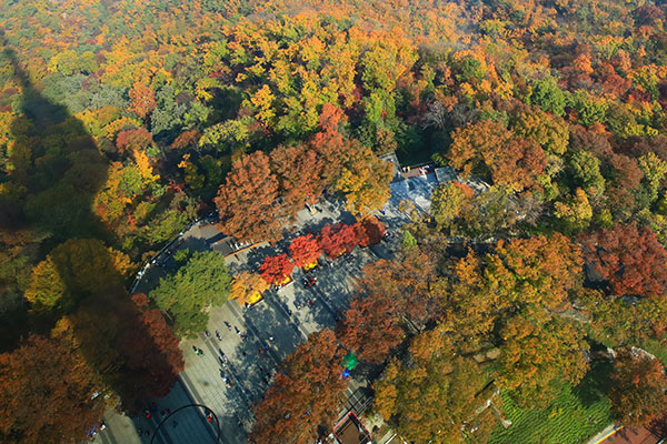 Disfrutar del otoño en Seúl