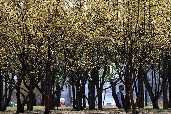 Parque Yeouido de Seúl