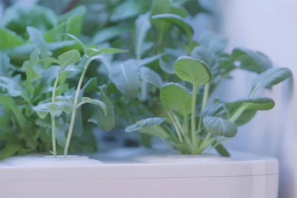 家庭用の水耕栽培器を開発した「エーアイプラス」