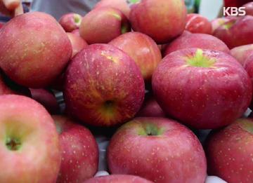 사과 40개를 먹어야 하나?