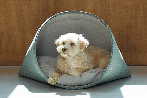 Howlpot Extends a Sense of Design to Pet Supplies