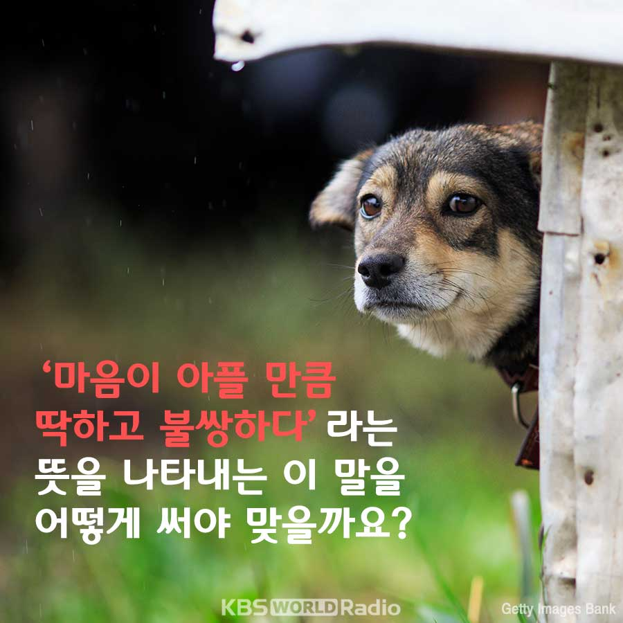 비를 맞은 강아지가 너무 ________.