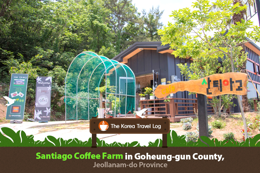 #15. Santiago Coffee Farm in Goheung-gun County, Jeollanam-do Province